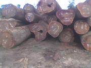 bubinga, okan, tali, iroko, maobi, sappeli, ayous, doussi and many more